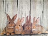 Fußmatte Kaninchen Familie